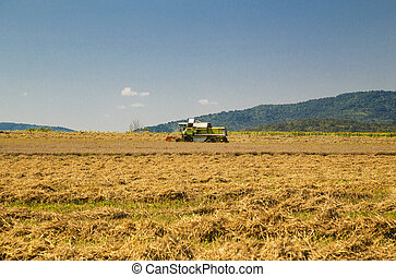 Harvester working on the field
