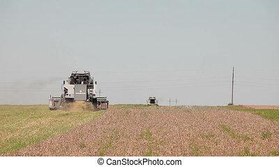 Harvesters harvest