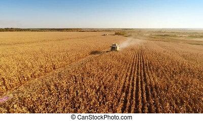 Harvesters Work on Cornfield - Aerial shot: Combine...