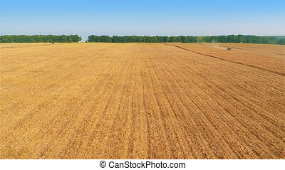 Harvesters Work on Cornfield