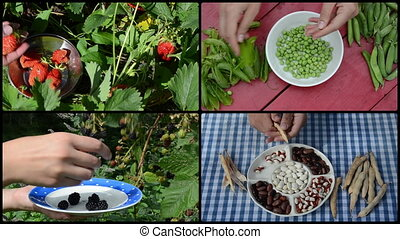 harvesting berry and legume peas and beans in garden. collage