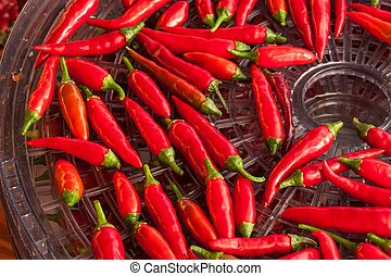 Harvesting chilli peppers. Preparing for drying spicy seasoning. Electric food dryer.