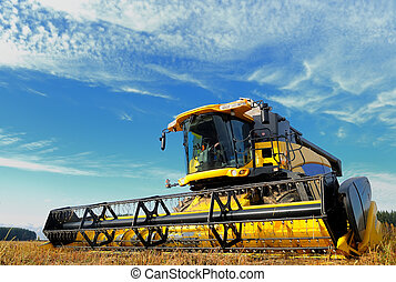 harvesting combine in the field - yellow combine in the ...