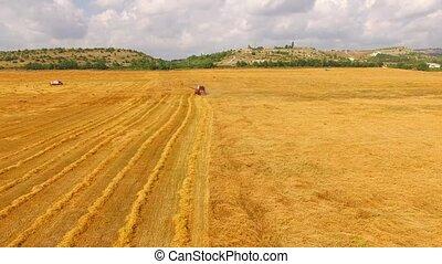 Harvesting Combine Working At Golden Field