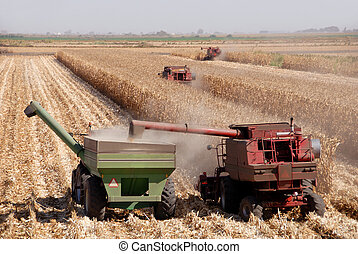 Harvesting Corn - Combines harvesting corn, San Joaquin...