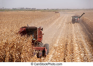 Harvesting Corn - Combines harvesting corn, San Joaquin ...