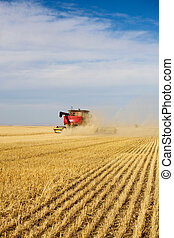 Harvesting - Dust & chaff swirl and create a haze around a...