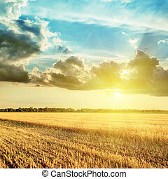 harvesting field and sunset in clouds over it