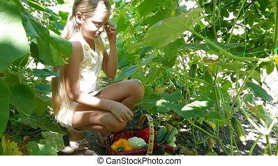 Harvesting Fresh Vegetable