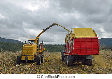 harvesting maize for silage - Farmers harvest a crop of ...