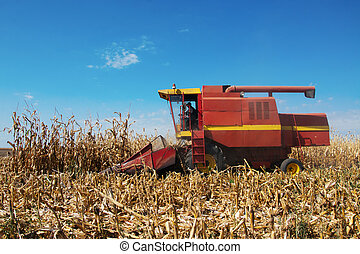 Harvesting of corn field with combine in early autumn