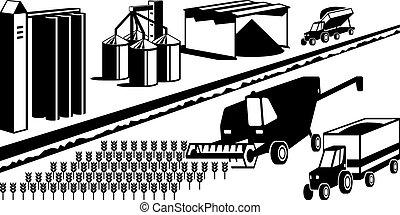 Harvesting of grain cereals