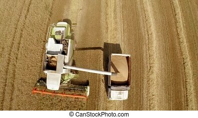 Harvesting of grain crops. The work of technology in the...