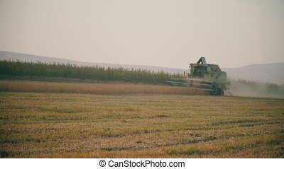 harvesting of soybean by combine