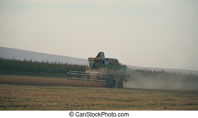 harvesting of soybean by combine - harvesting soybean on the...