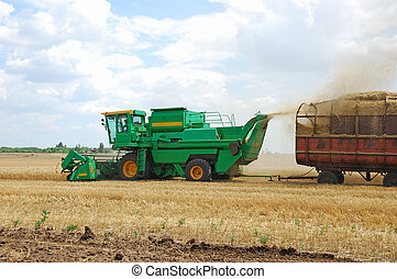 Harvesting of wheat