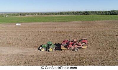 Harvesting potatoes in field - aerial potatoes harvesting...