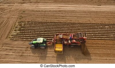 Harvesting potatoes on the field - Farm machinery harvesting...