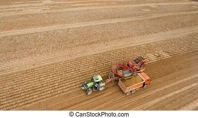 Harvesting potatoes on the field - Farm machinery harvesting...