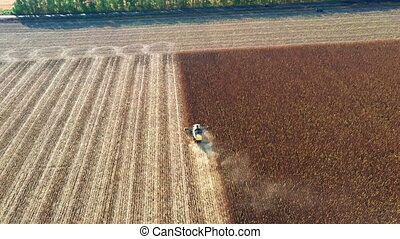 Harvester harvests sunflowers on a sunny autumn day - drone following shot. Collecting sunflower seeds in a farm field using a combine harvester - tracking Drone following