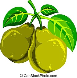 Harvesting symbol, vector fruits isolated. Two organic sweet...