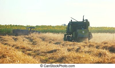 Harvesting the cornfield with combine harvester. Agriculture...