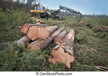 Harvesting timber - pile of logs at a clearing in Swedish...