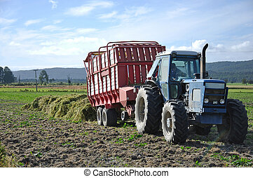 harvesting triticale for silage - Feed wagon unloads...