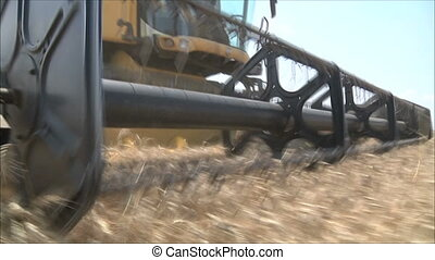 harvesting wheat 3