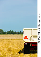 Harvesting wheat during the end of summer