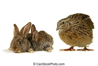 has sung and rabbit ?n a white background...