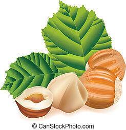 hasselnötter, med, leaves., nötter, på, a, vit, bakgrund.