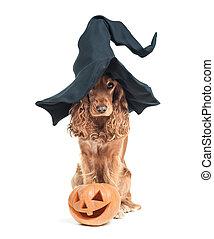 hatásos, ülés, kutya, lát, boszorkány kalap
