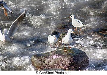 hatásos, csoport, közül, sirály, képben látható, hintáztatni, -ban, a, tenger part