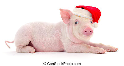 hat., claus, rood, kerstman, varken