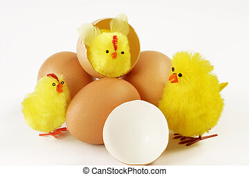 Hatched chicks