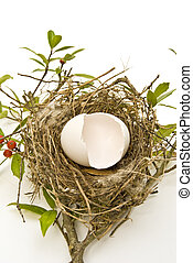 Hatched Egg In Bird's Nest