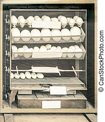 incubator - hatching apparatus (incubator)