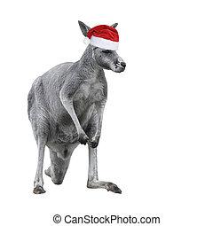 hatt, bakgrund., känguru, vit, isolerat, manlig, jul