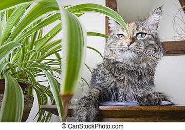 Haughty Cat