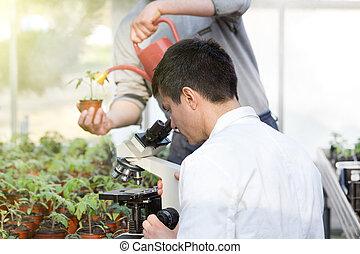 haus, mikroskop, wissenschaftler, grün