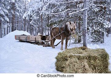 haus, pferd, weihnachten