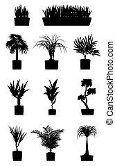 haus pflanzt, silhouettes., pflanze, gewachsen, in, a, behälter, topf, innenseite, a, haus, oder, wohnung, buero, dekorativ, grün, plant., wohnung, stil, karikatur, abbildung, freigestellt, weiß, hintergrund