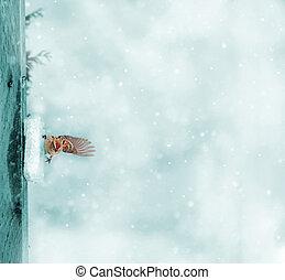 haussperling, paßte, schneesturm, bild