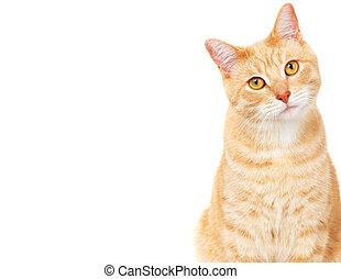 haustier, cat.