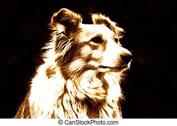 haustier, collie hund, umrandungen