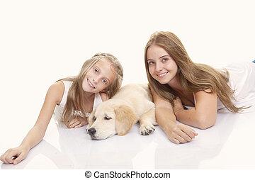 haustier, goldener labradorhund, familie