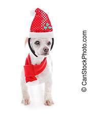 haustier, hund, tragen, weihnachten, stirnband, und, schal
