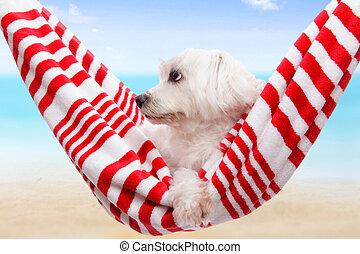 Haustier, sommer, Feiertag, hund