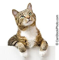haut, chat, regarder, au-dessus, blanc, bannière